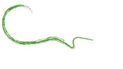 Ceol-Na-Coille-Logo-2017-Final-Green